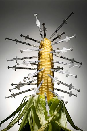 GMO FOODS PICTURES
